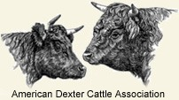 Dexter Cattle Association